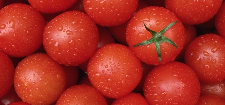 В чем заключается польза и вред помидоров?