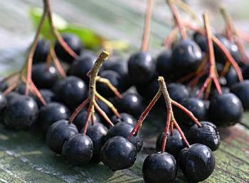 Как черноплодная рябина влияет на организм?