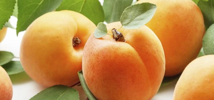 Полезные свойства и возможность вреда от абрикосов