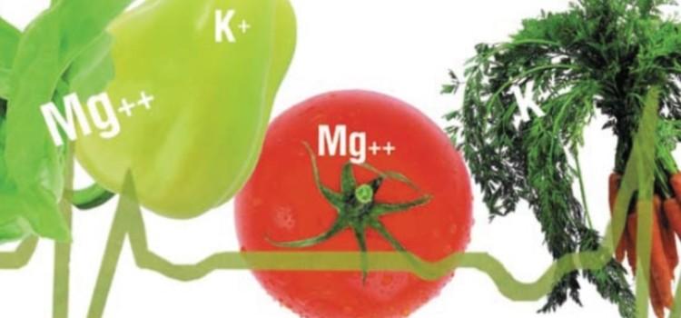 Продукты, в которых содержится магний и калий, необходимые для сердца и других систем организма