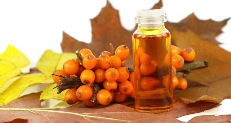 Облепиха: полезные свойства и противопоказания. Применение облепихового масла, ягод, сока облепихи в лечебных рецептах