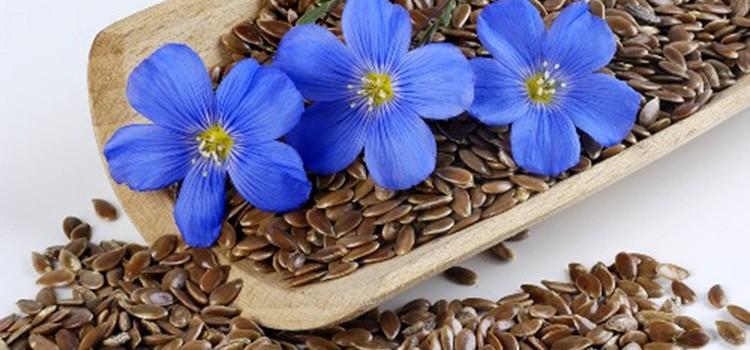 В чем польза льняного семени и возможен ли от него вред?