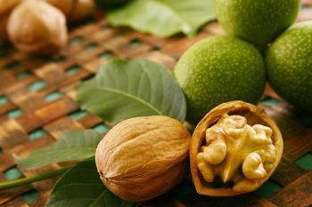 Полезные свойства масла из зрелых и зеленых грецких орехов
