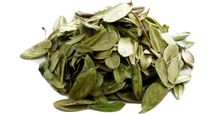 Листья брусники - полезные свойства и показания к применению