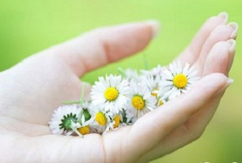 Применение природных свойств ромашки — как ее можно использовать