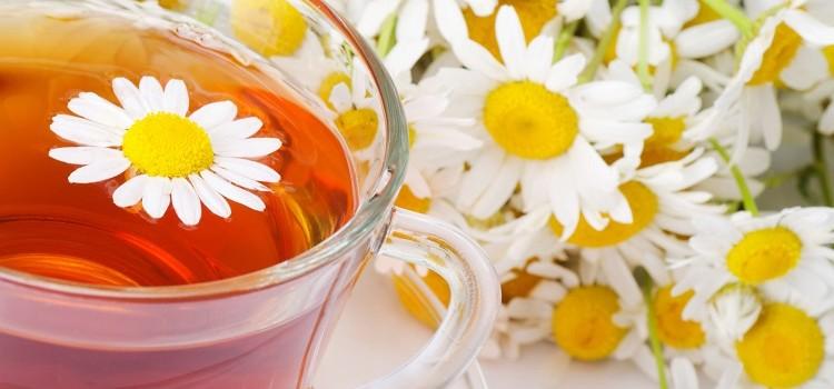 Ромашковый чай - лечебные свойства для организма, польза и потенциальный вред