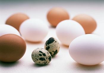 Польза перепелиных яиц и преимущества в сравнении с куриными