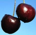 Черешня - польза и вред, целебные свойства и правила хранения ягоды