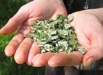 Использование листьев малины в косметологических целях
