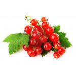 Полезные свойства, применение и противопоказания красной смородины