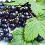 Полезные свойства листьев смородины