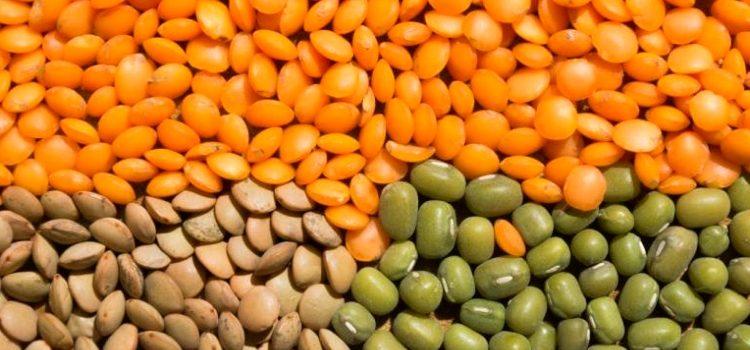 Польза и вред чечевицы для здоровья человека