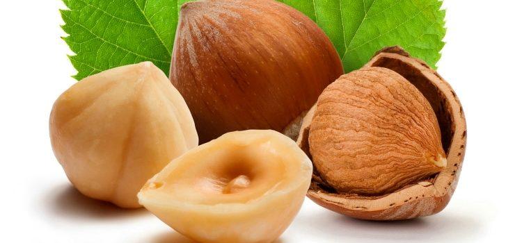 Орех фундук - польза и вред для организма человека