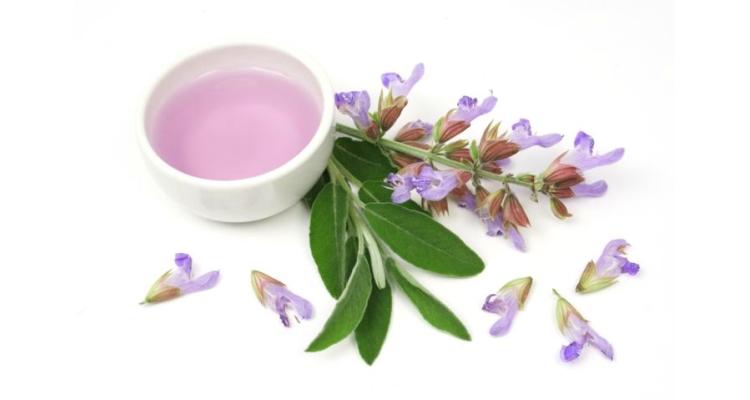 Шалфей: лечебные свойства для женщин при климаксе