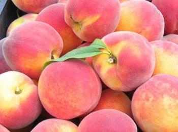 Какую пользу приносят персики для здоровья человека