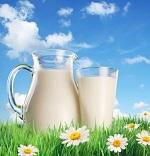 Козье молоко и его полезные свойства для организма человека