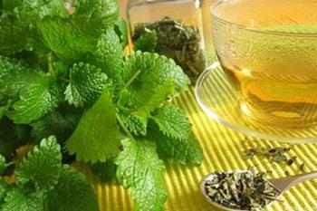 В чем польза и вред листьев мелиссы - состав продукта