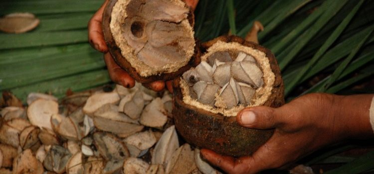 Вред и польза необычного бразильского ореха для женщин