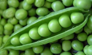Применение консервированного зеленого горошка в кулинарии - польза и возможный вред