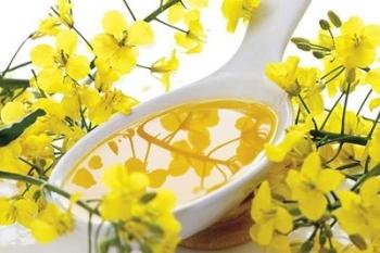 Как принимать рыжиковое масло, какова польза, вред и противопоказания продукта?