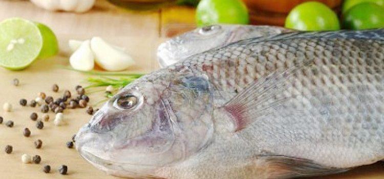 где водится рыба толстолобик