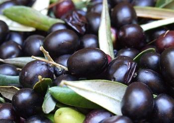 Полезные свойства маслин и правила выбора продукта