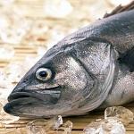 Польза и вред рыбы минтай для здоровья человека — основные моменты