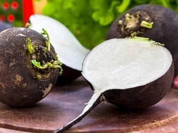 Редька и правила выбора качественного корнеплода