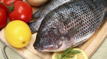 Тилапия - о пользе и вреде рыбы для здоровья человека