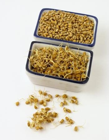 Применение пророщенной пшеницы в рецептах народной медицины