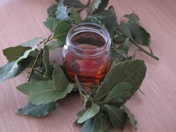 Польза и лечебные свойства отвара из лаврового листа, возможный вред и противопоказания к употреблению