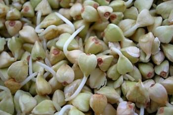 Польза и вред зеленой гречки, пищевая и энергетическая ценность