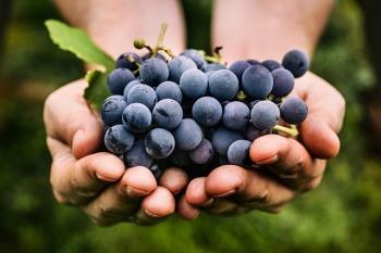 Лечебные свойства винограда