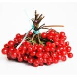 Какова польза калины красной для здоровья человека?