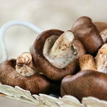 Рекомендации по употреблению грибов шиитаке: свежие, сухие, маринованные