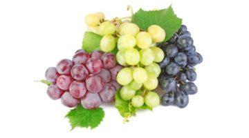 Польза и вред винограда для организма, области применения, противопоказания