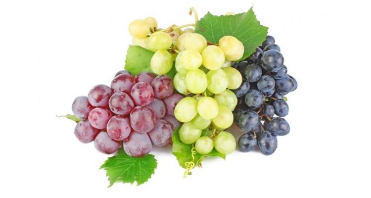 Виноград польза и вред для здоровья