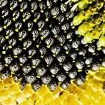 Чем полезны семечки подсолнуха - лечебные свойства для здоровья человека