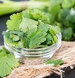 Кинза — польза и вред растения для нашего с вами организма