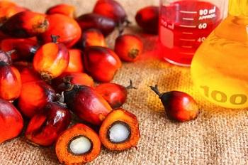 Правила выбора качественных продуктов - пальмовое масло и его полезные свойства