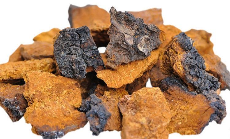 Содержание полезных веществ и микроэлементов в грибах чага