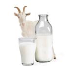 Основная польза козьего молока для женщин