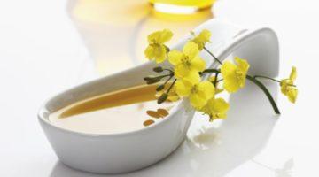 Польза и вред рапсового масла, применение и меры предосторожности