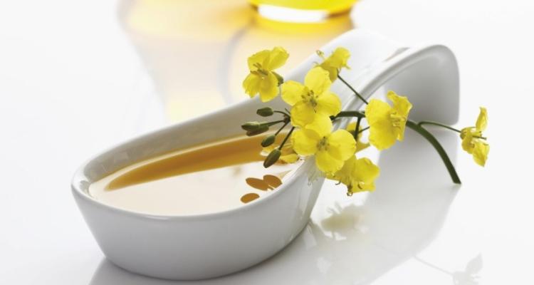 Рапсовое масло польза и вред: как принимать для кожи и в детском питании