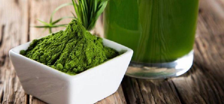Спируллина, ее полезные свойства и противопоказания к употреблению