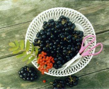 Состав ягод санберри
