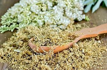 Использование растения таволга в кулинарии - полезные советы