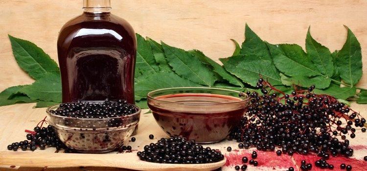 Лечебное растение черная бузина - фото, полезные свойства и противопоказания