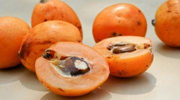 Мушмула - полезные свойства и противопоказания к употреблению плодов