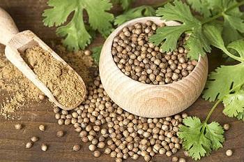 Правила выбора качественных продуктов - кориандр и его полезные свойства